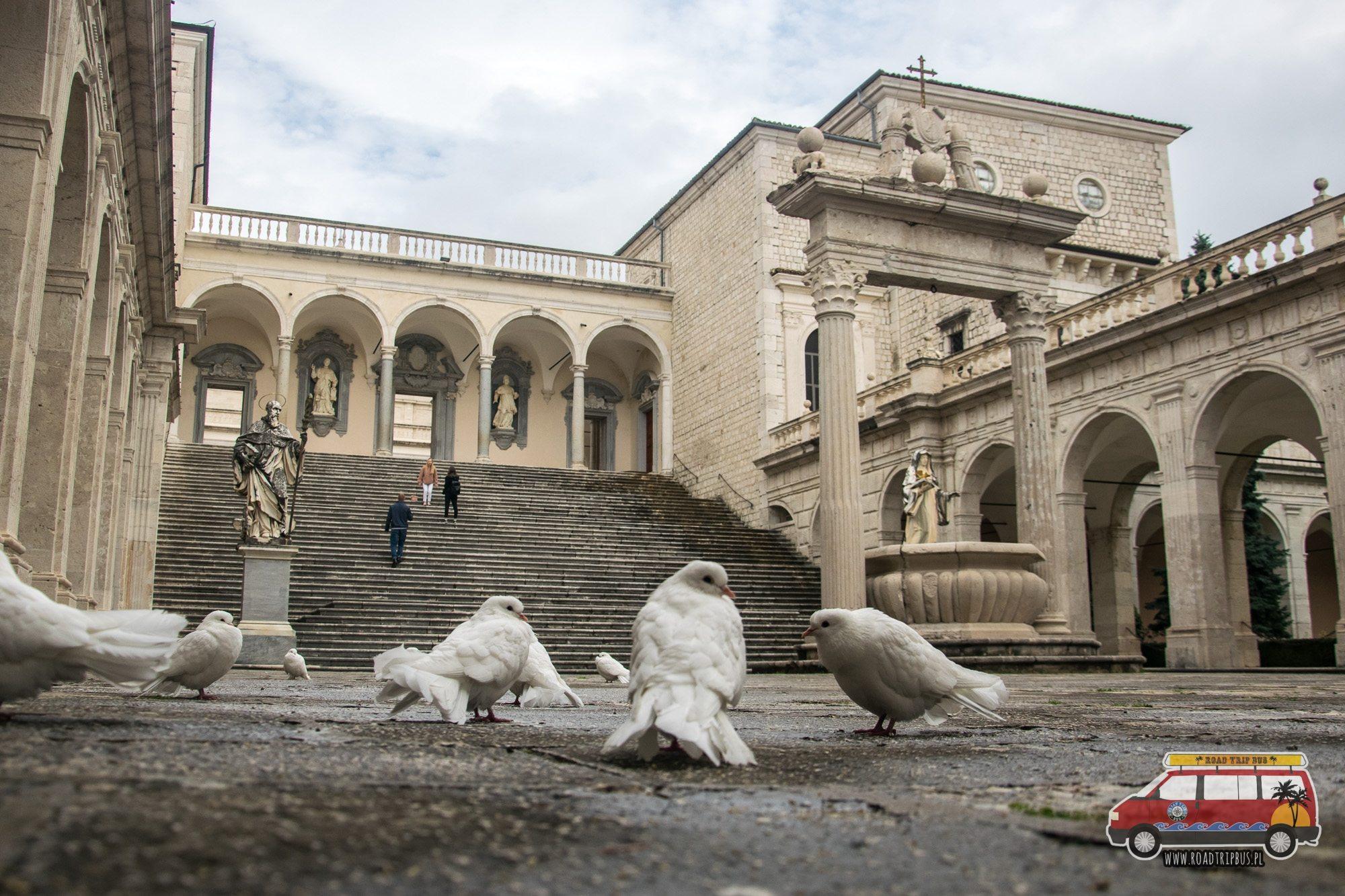 gołębie w klasztorze